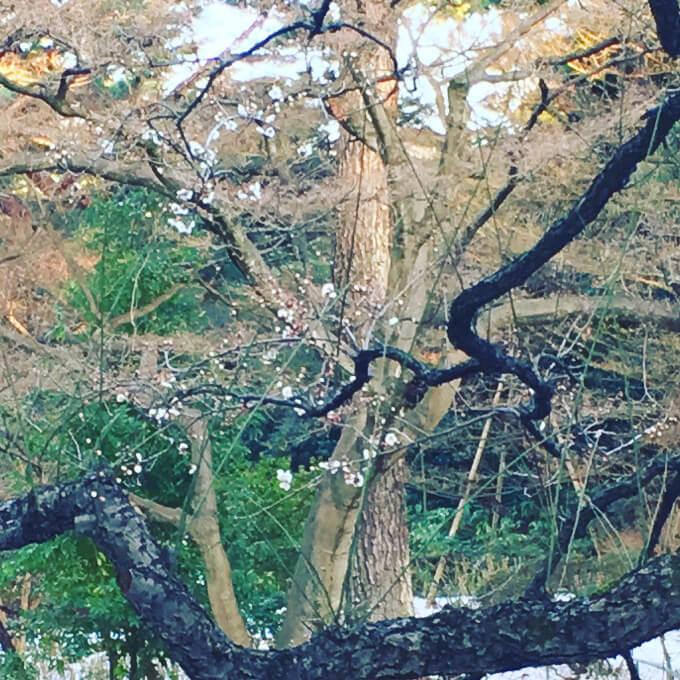 東京都庭園美術館庭園