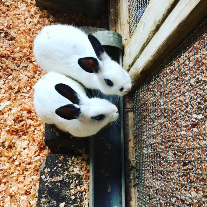 ビッグⅡ動物園ウサギ