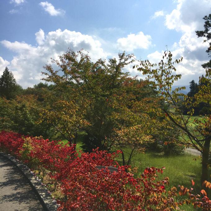 佐渡トキの森公園